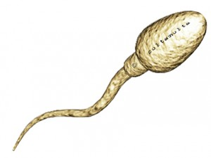 sperm of coltamolta with copyright